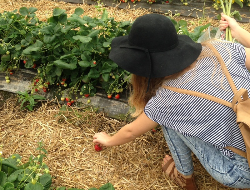 chloe picking strawberries