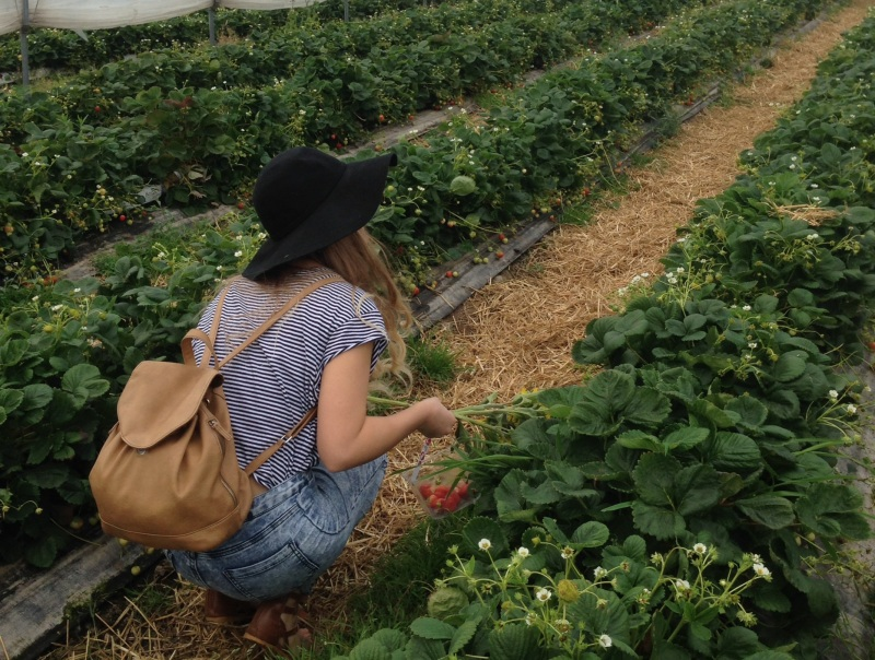 chloe strawberry picking